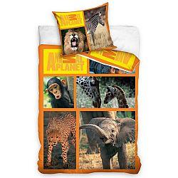 Carbotex Obliečky Animal Planet - Safari 160x200 70x80, 160 x 200 cm, 70 x 80 cm