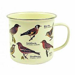 Plecháčik - Vtáci